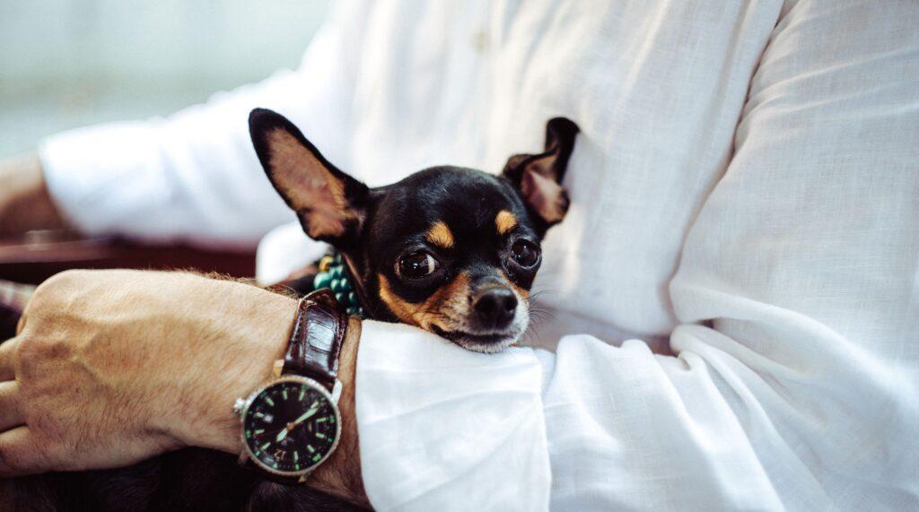 Get an office dog